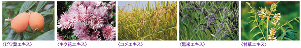 抗酸化力の強い植物発酵エキス
