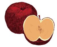 活性酸素で酸化したリンゴ