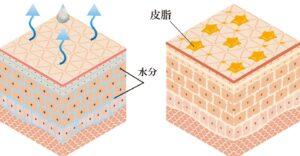 天然のクリーム皮脂膜